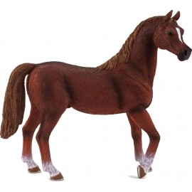 Arabian Stallion Chestnut