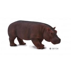 Hippopotamus Female