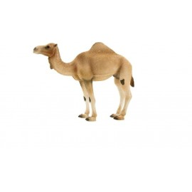 Chameau d'Arabie