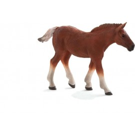 Suffolk Punch Foal