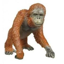 Orangutan Adult