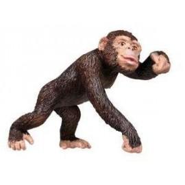 Chimpanzee Adult
