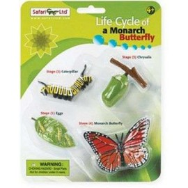 Life Cycle Monarch Butterfly