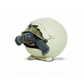 Galapagos Tortoise Hatchlin