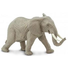 African Elephant Adult